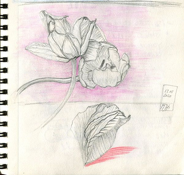 Tulips and Blackbird - image 2 - student project