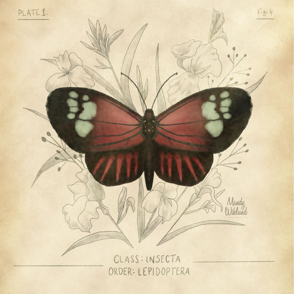 Scientific Butterfly Illustration - image 1 - student project