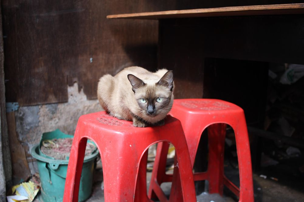 A little corner in Bangkok - image 2 - student project