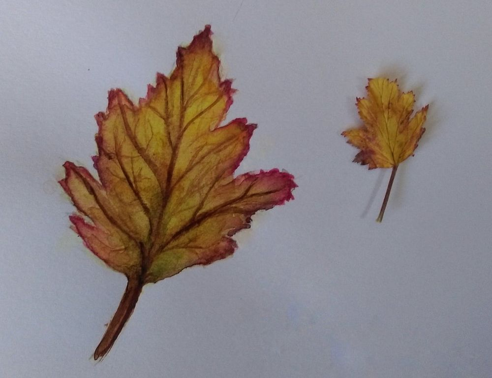 Day One Leaf (Watercolor) - image 1 - student project