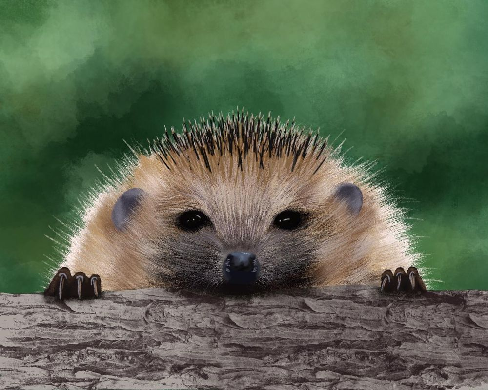 Hedgehogs - image 3 - student project