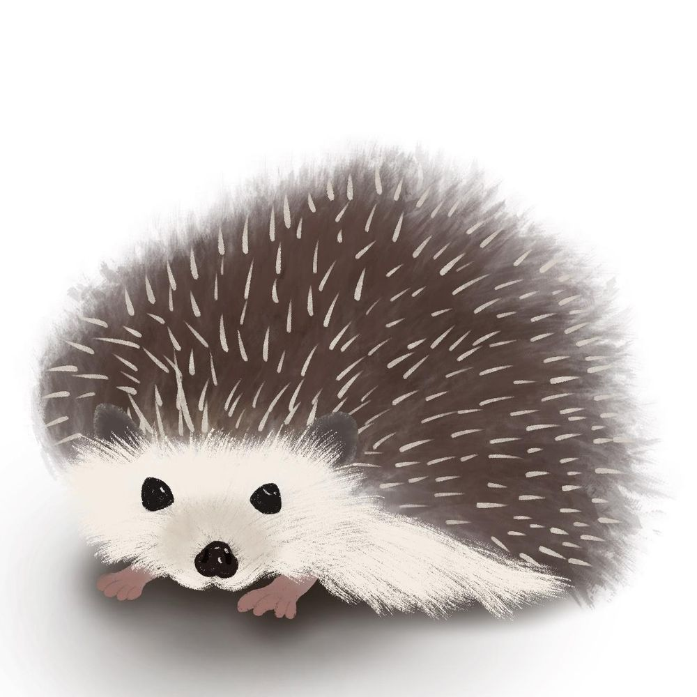 Hedgehogs - image 1 - student project