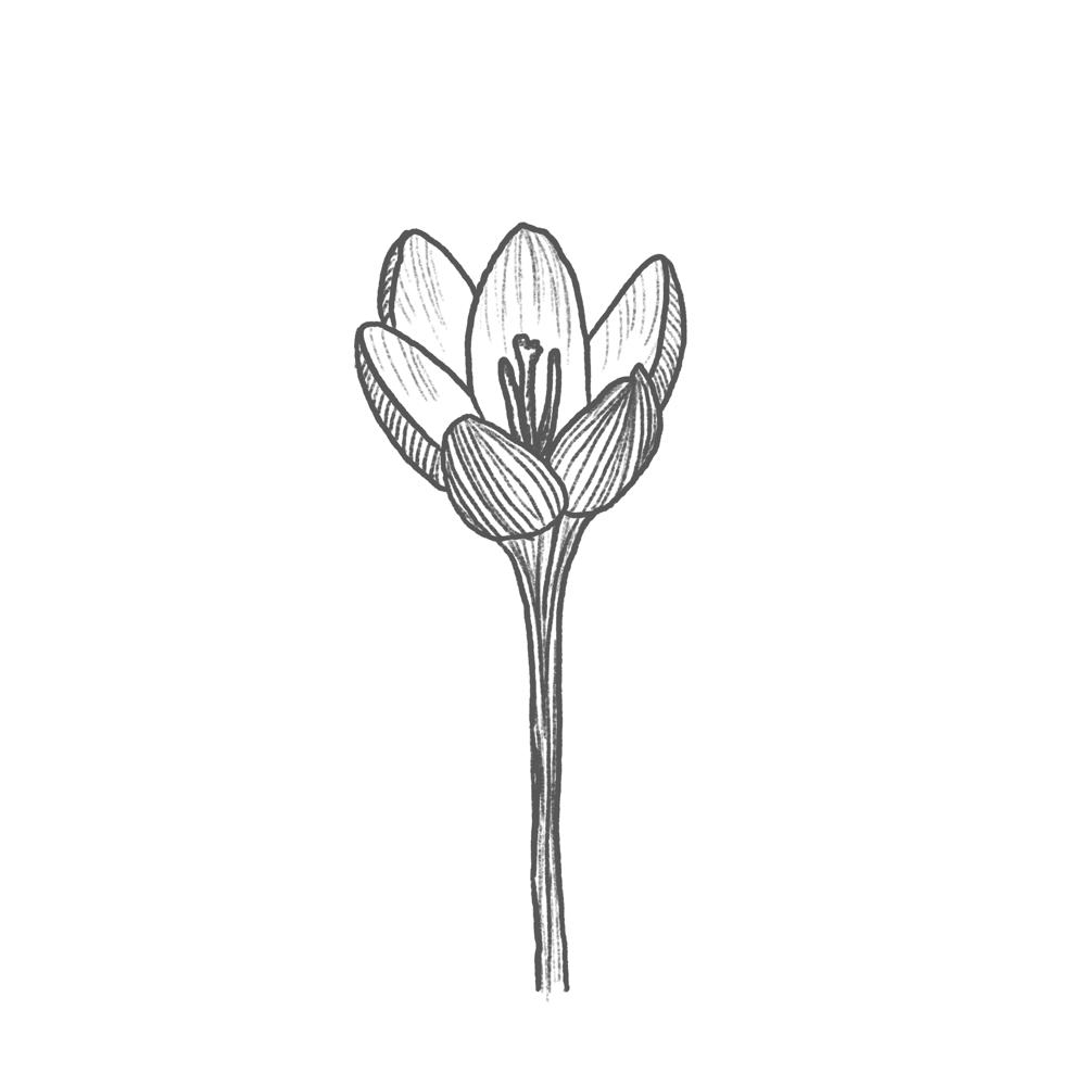 Blue Bouquet - image 2 - student project