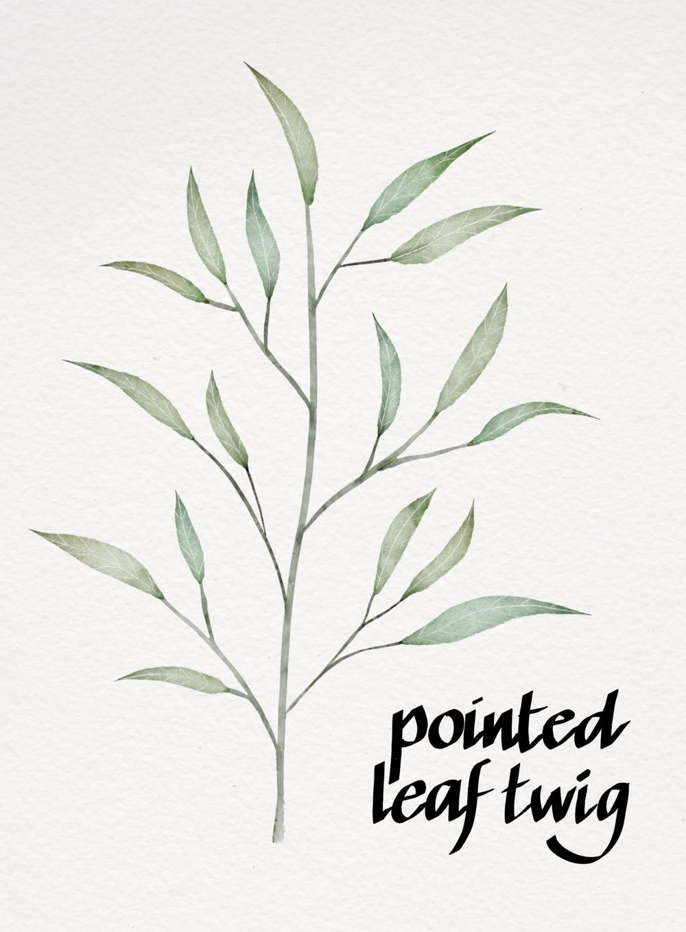 My Botanicals - image 5 - student project