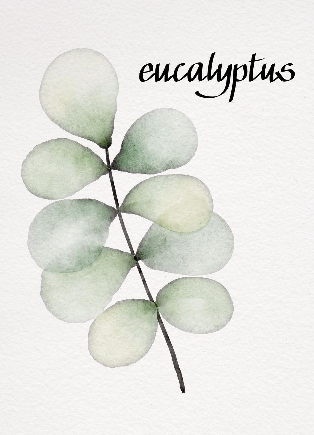 My Botanicals - image 1 - student project