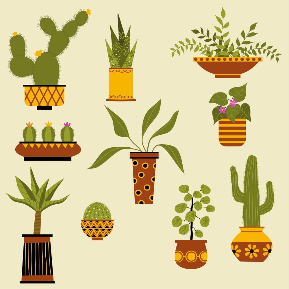 Houseplants - image 3 - student project