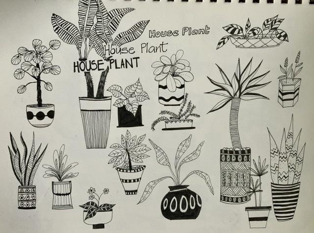Houseplants - image 1 - student project