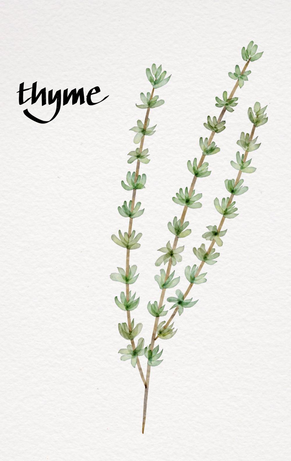 My Botanicals - image 3 - student project