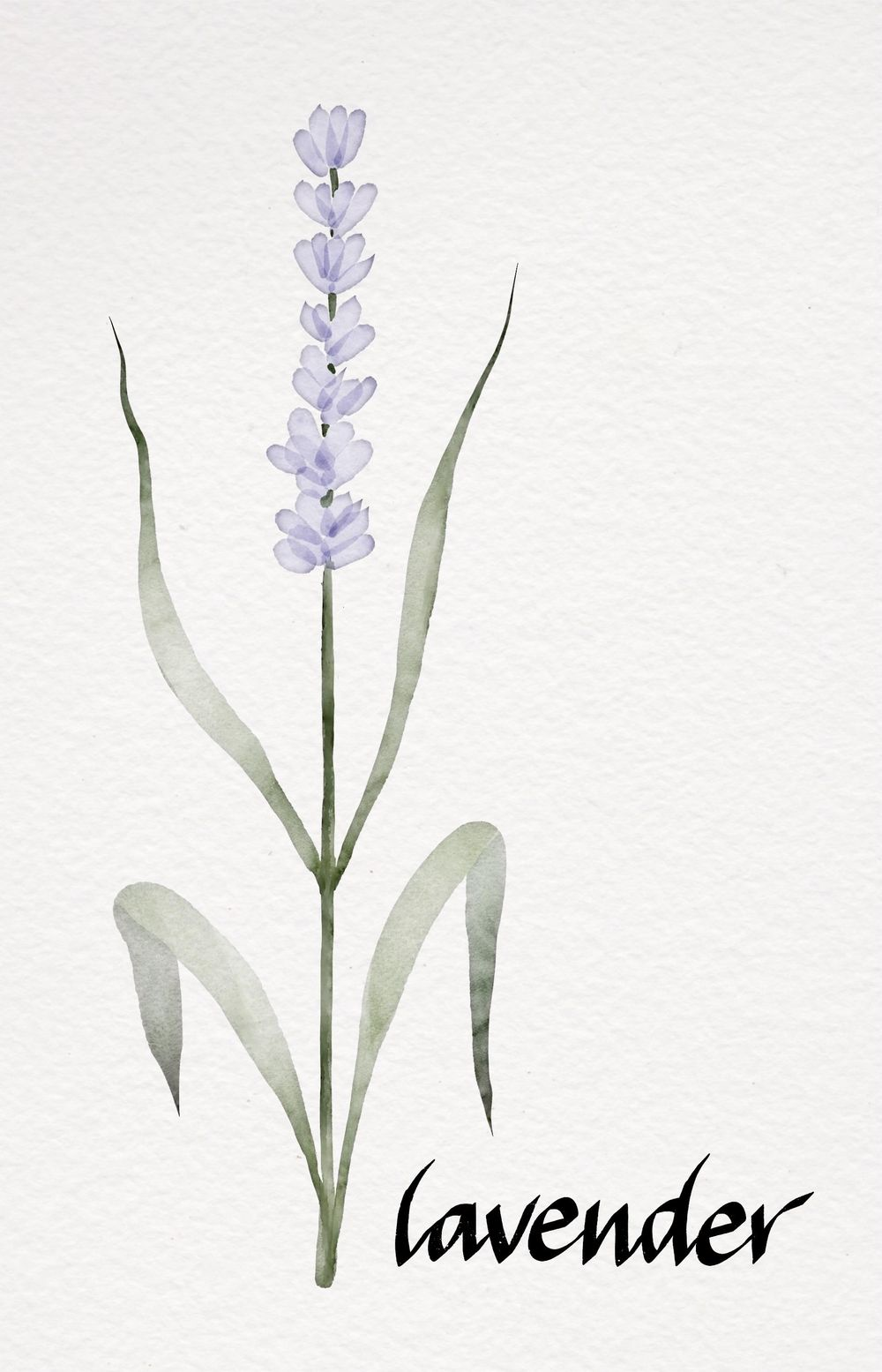 My Botanicals - image 6 - student project