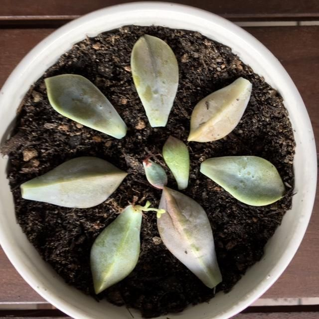 Little succies are growing!  - image 1 - student project