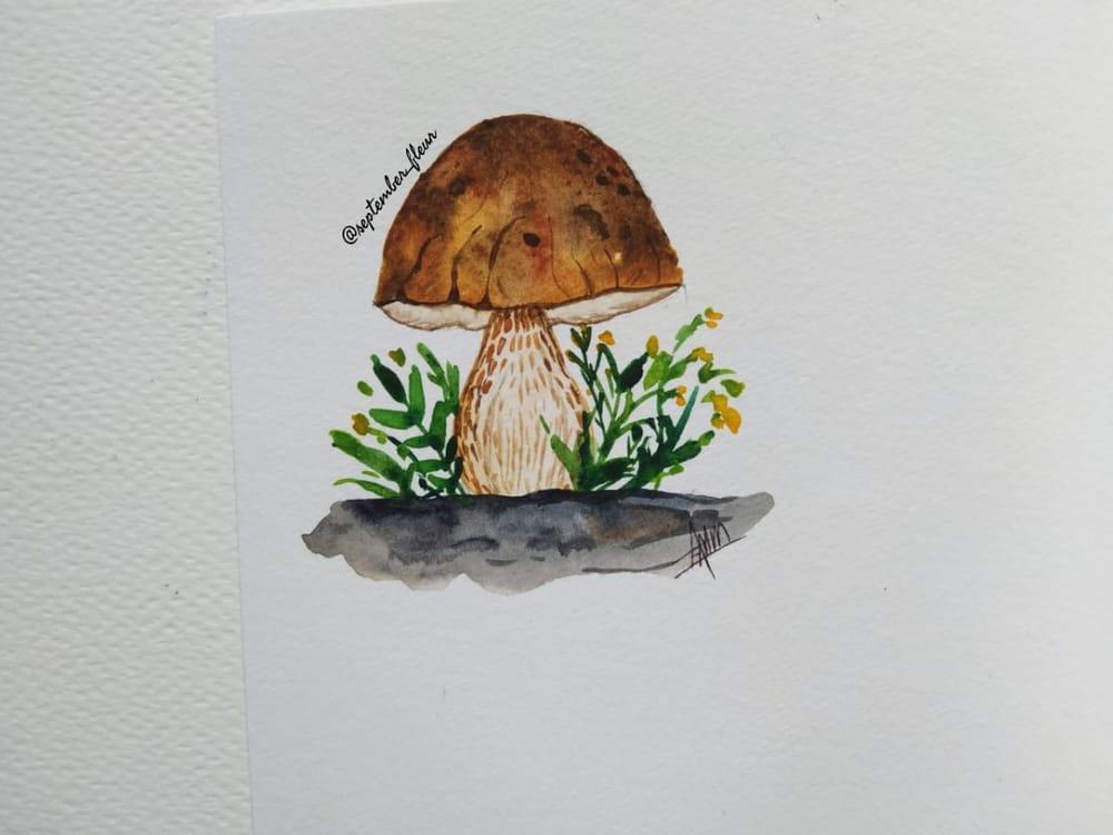 Mushrooms Mushrooms Everywhere... - image 2 - student project