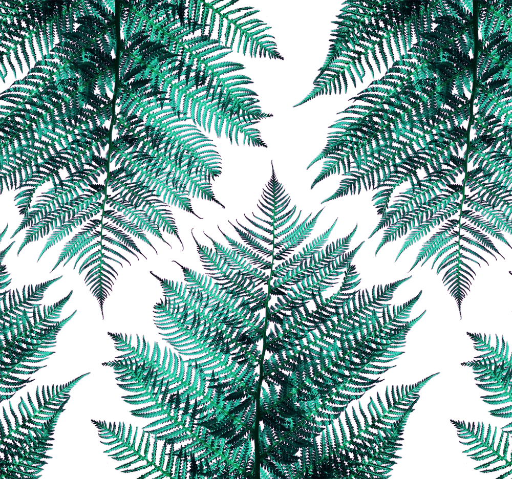 Fern - image 3 - student project
