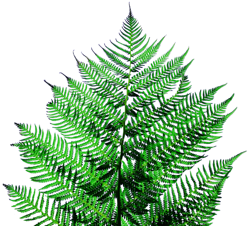 Fern - image 2 - student project