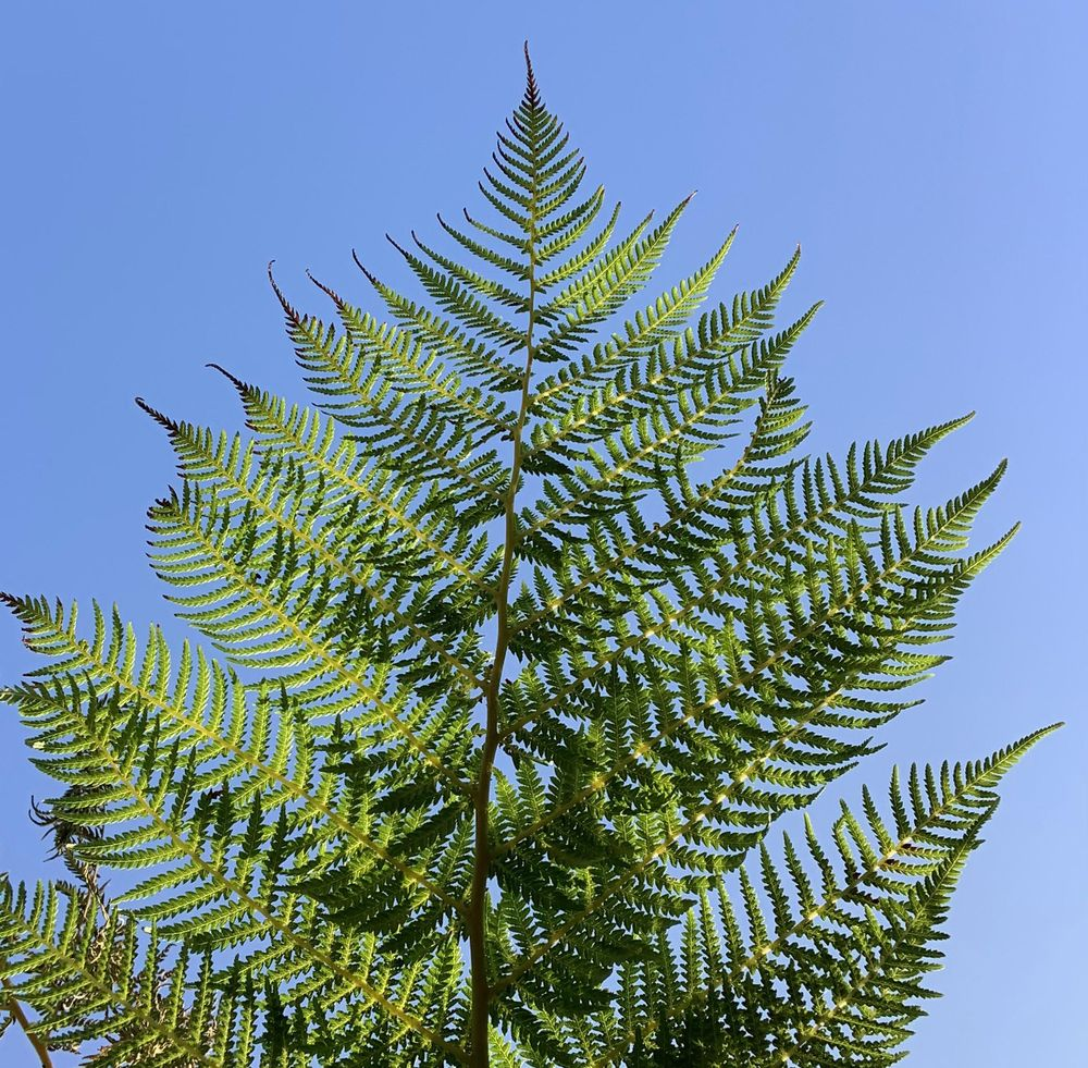Fern - image 1 - student project