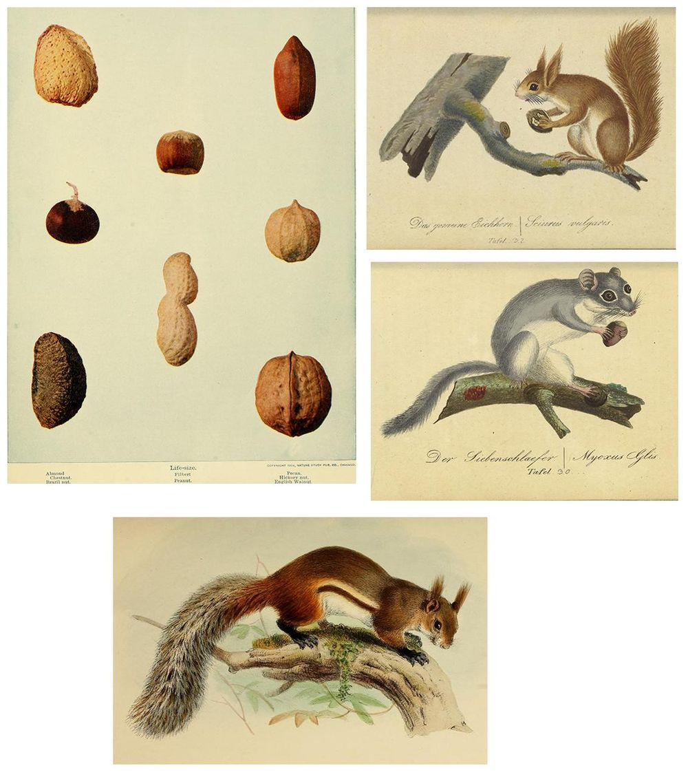 Photoshop Digital Pattern: Nuts For Squirrels - image 1 - student project