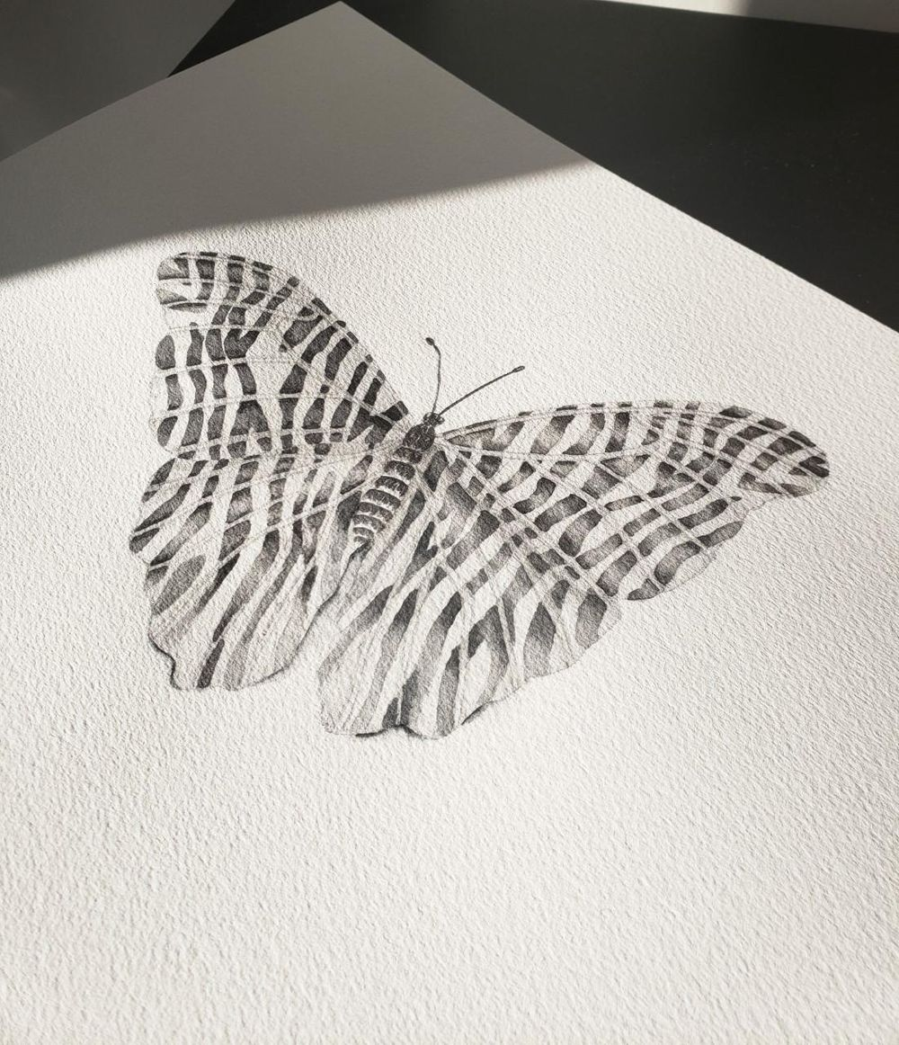 Butterfly with Zebra Stripes - image 1 - student project