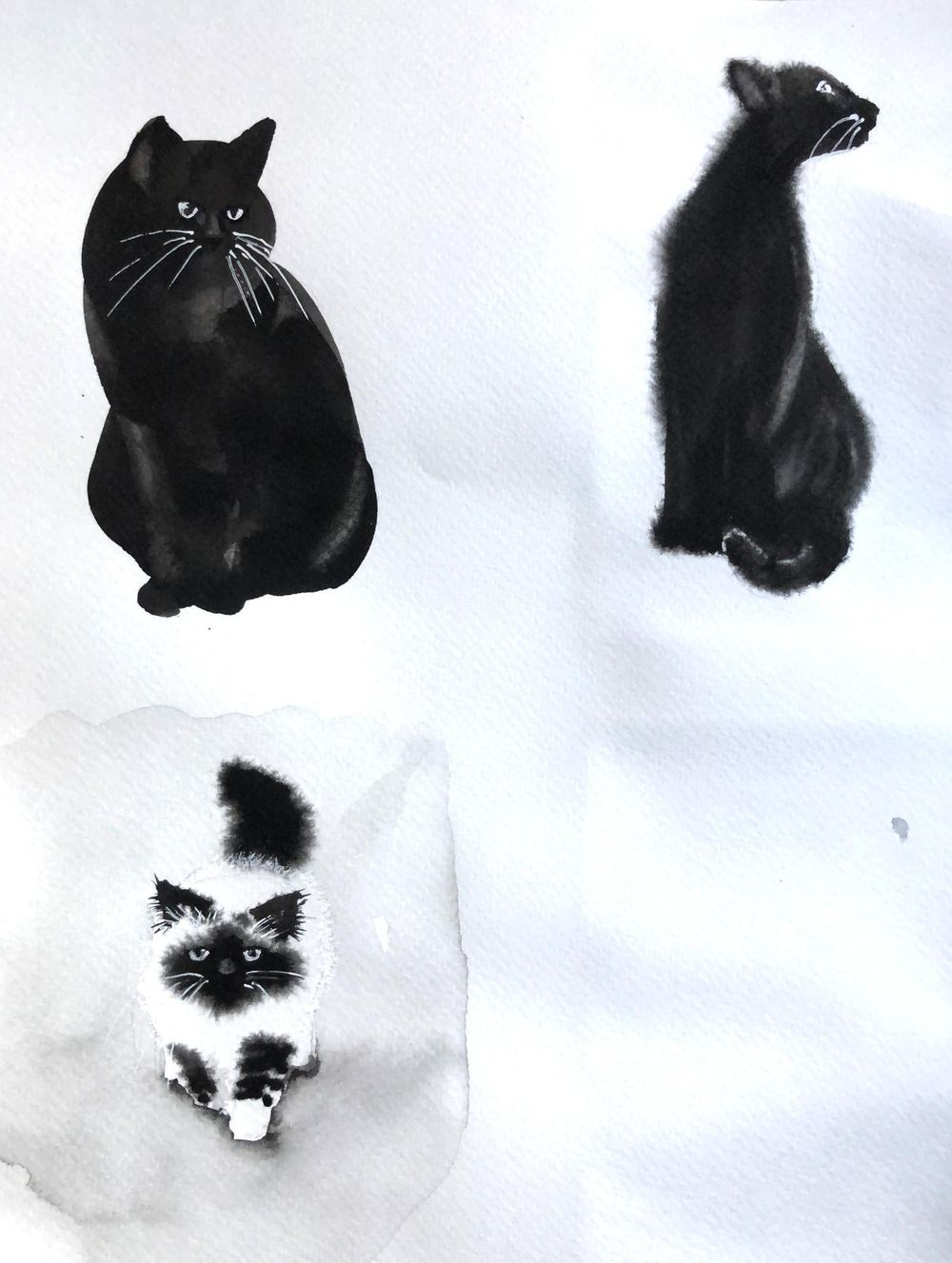 Monochrome cats - image 3 - student project
