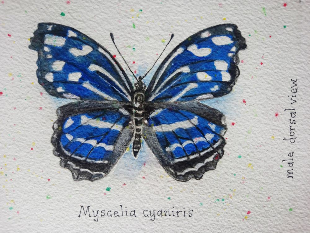 7 Butterflies of the Solomon Islands - image 2 - student project