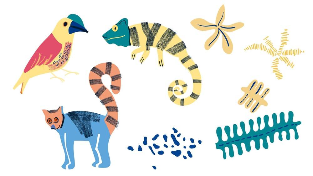 Madagascar Jungle - image 3 - student project