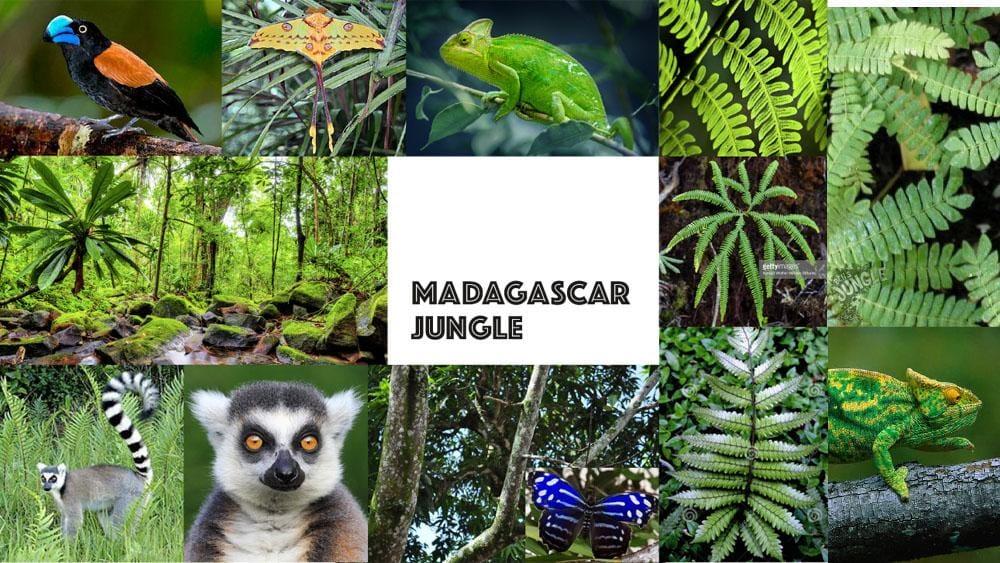 Madagascar Jungle - image 1 - student project