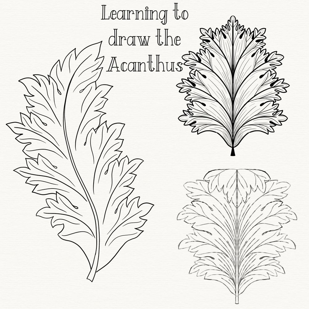 My Acanthus so far.. - image 2 - student project