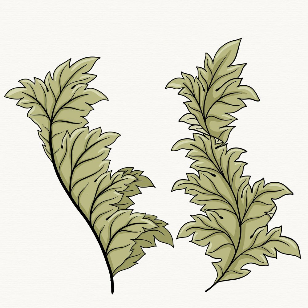 My Acanthus so far.. - image 1 - student project