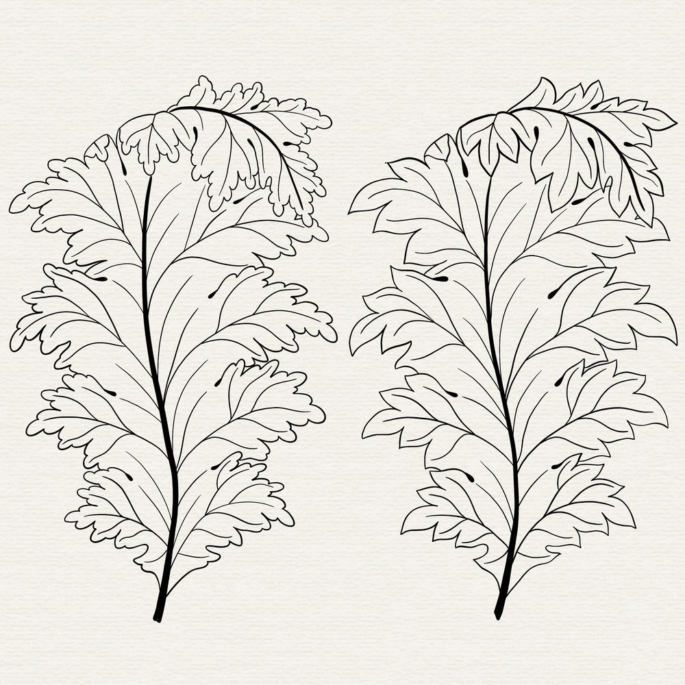 My Acanthus so far.. - image 3 - student project