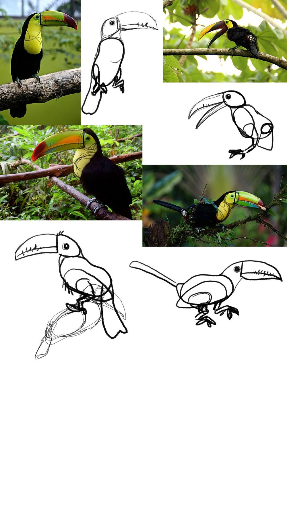 Hipster Toucan - image 1 - student project
