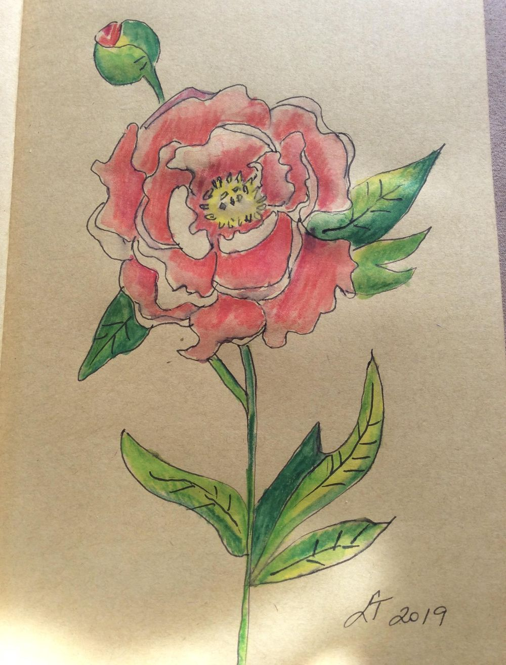 Pen and ink peonie - image 1 - student project
