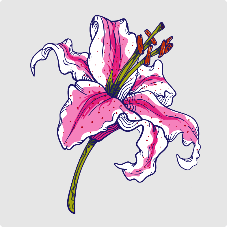 Practice Lily - image 1 - student project