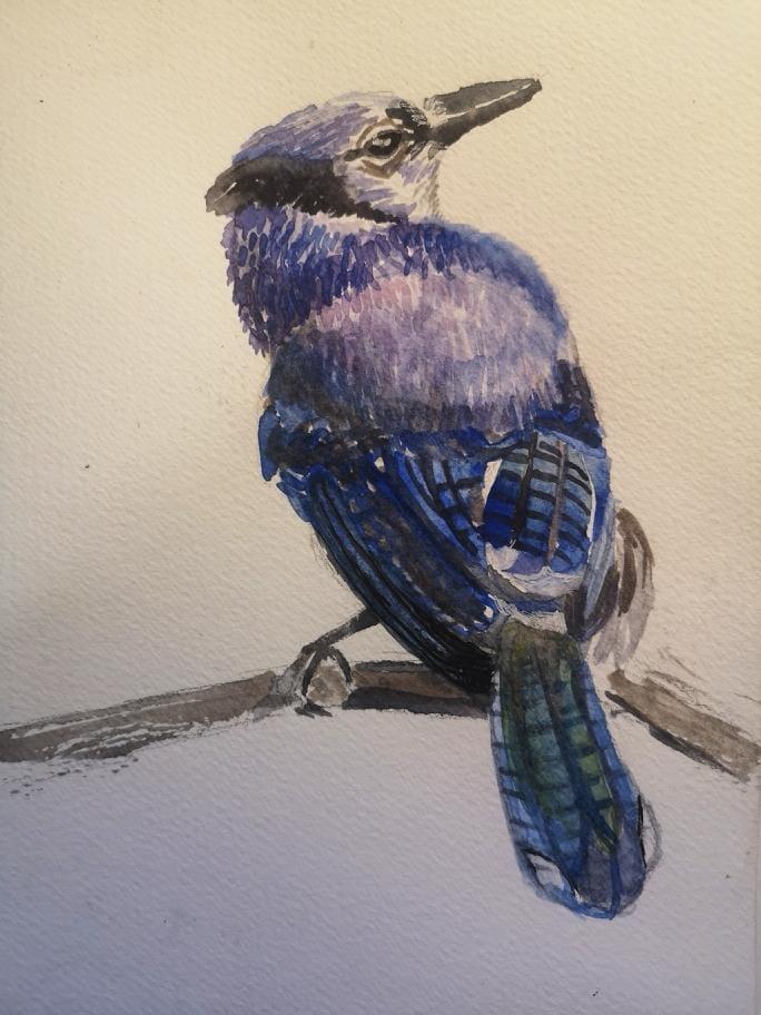bird - image 2 - student project
