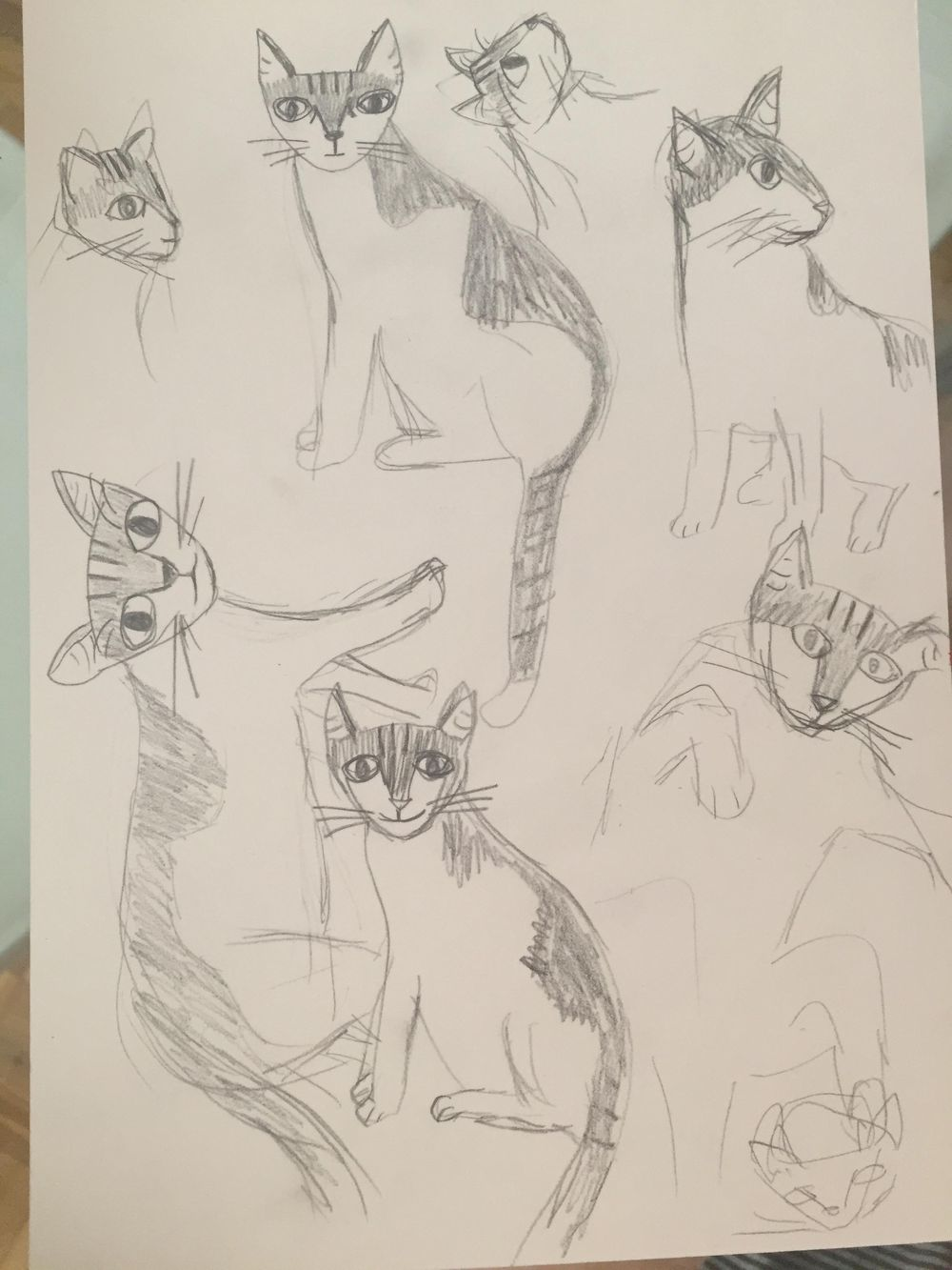 Madame Bovary cat - image 4 - student project