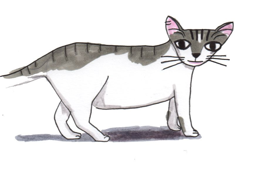 Madame Bovary cat - image 1 - student project