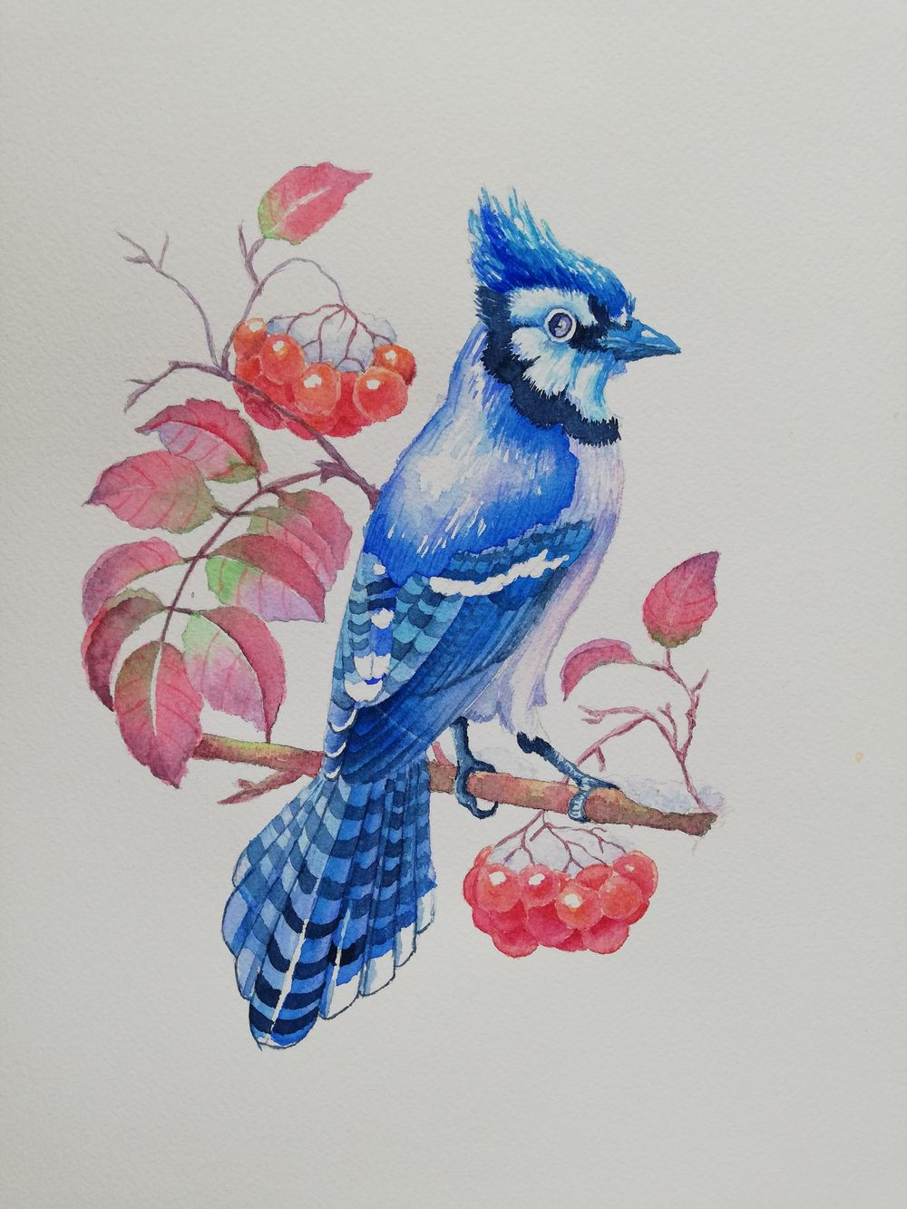 Watercolor BlueJay - image 2 - student project