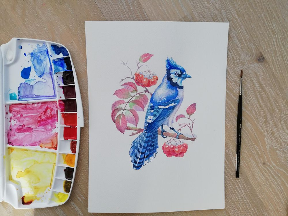 Watercolor BlueJay - image 1 - student project