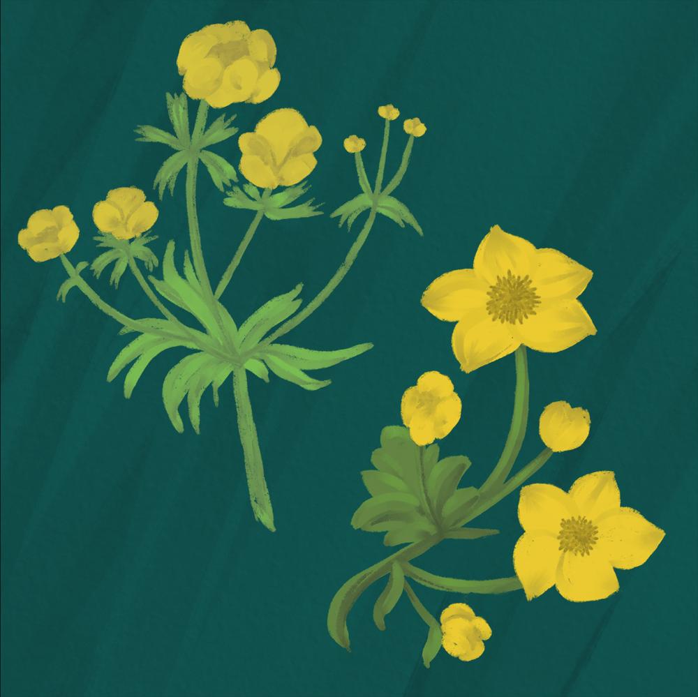Guache florals - image 1 - student project