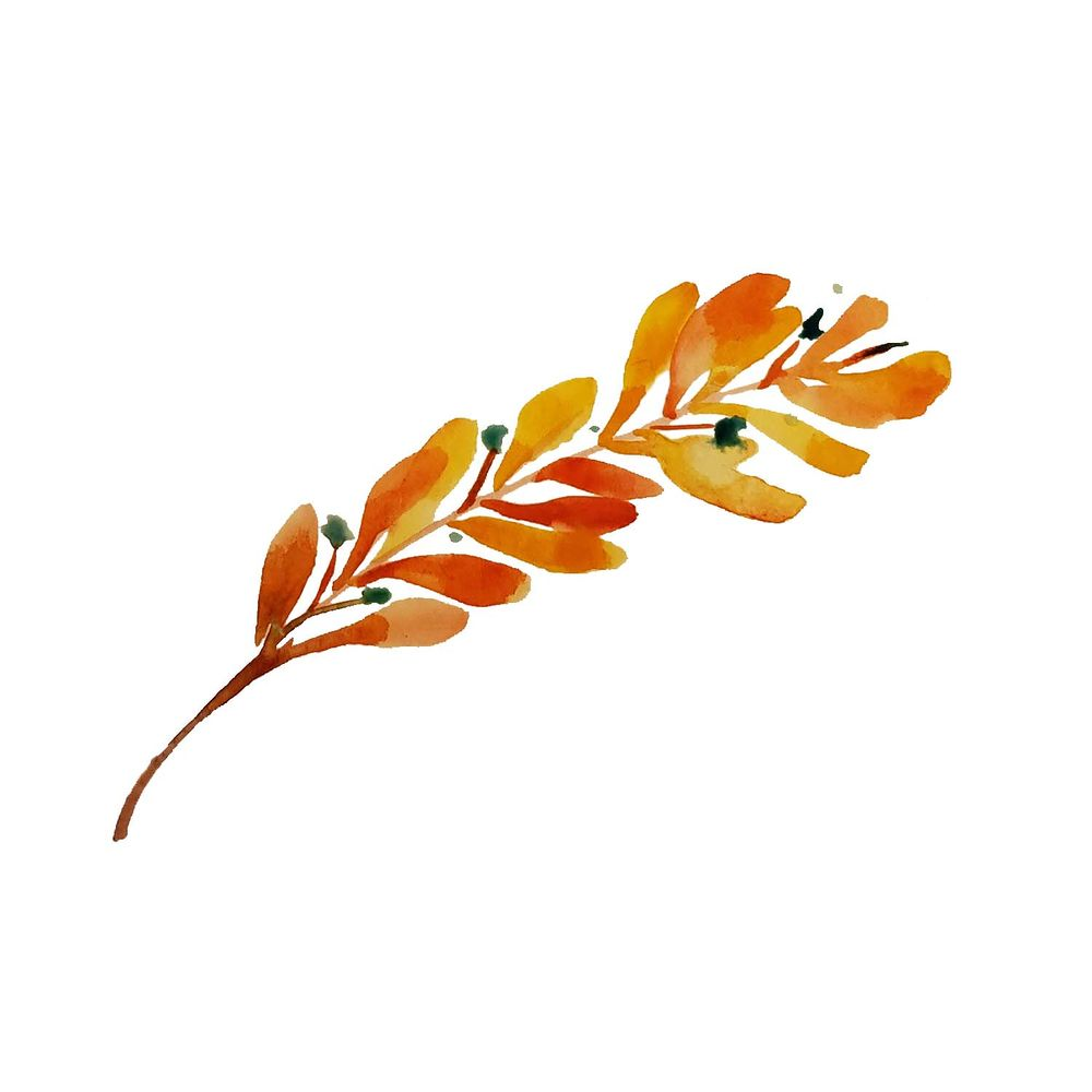 fall olive branch - image 1 - student project