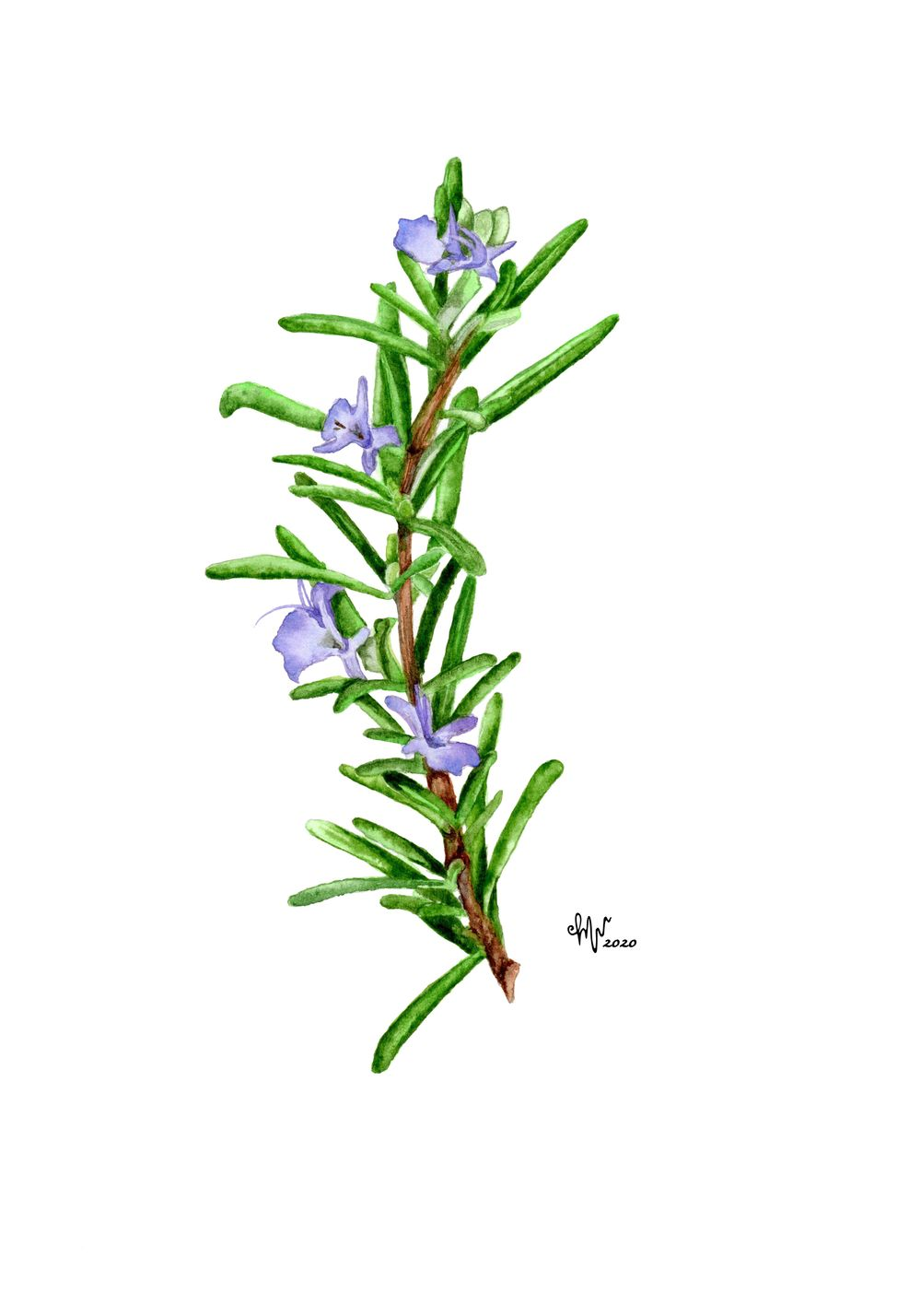 Watercolor Herbs - image 2 - student project