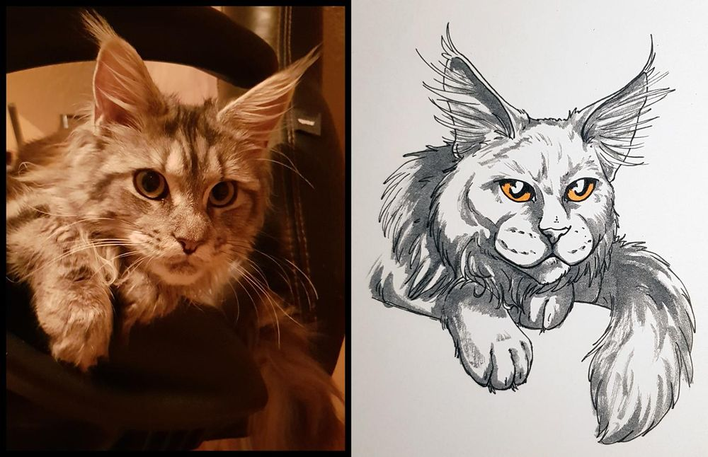 Sketchbook Cats - image 4 - student project