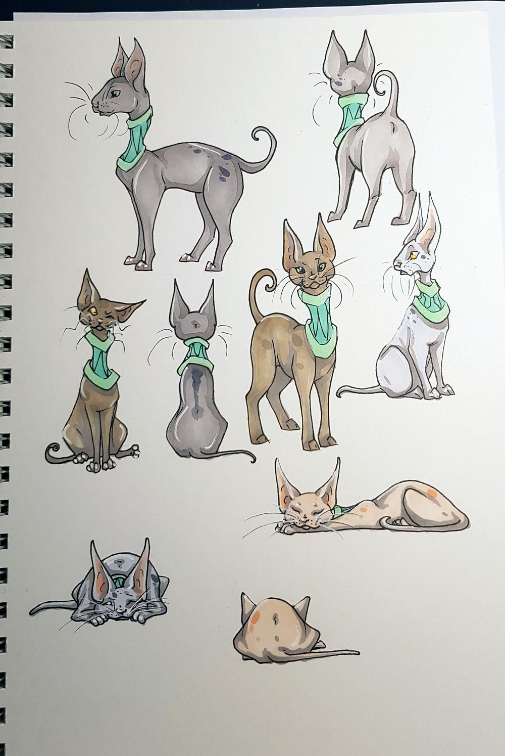 Sketchbook Cats - image 1 - student project