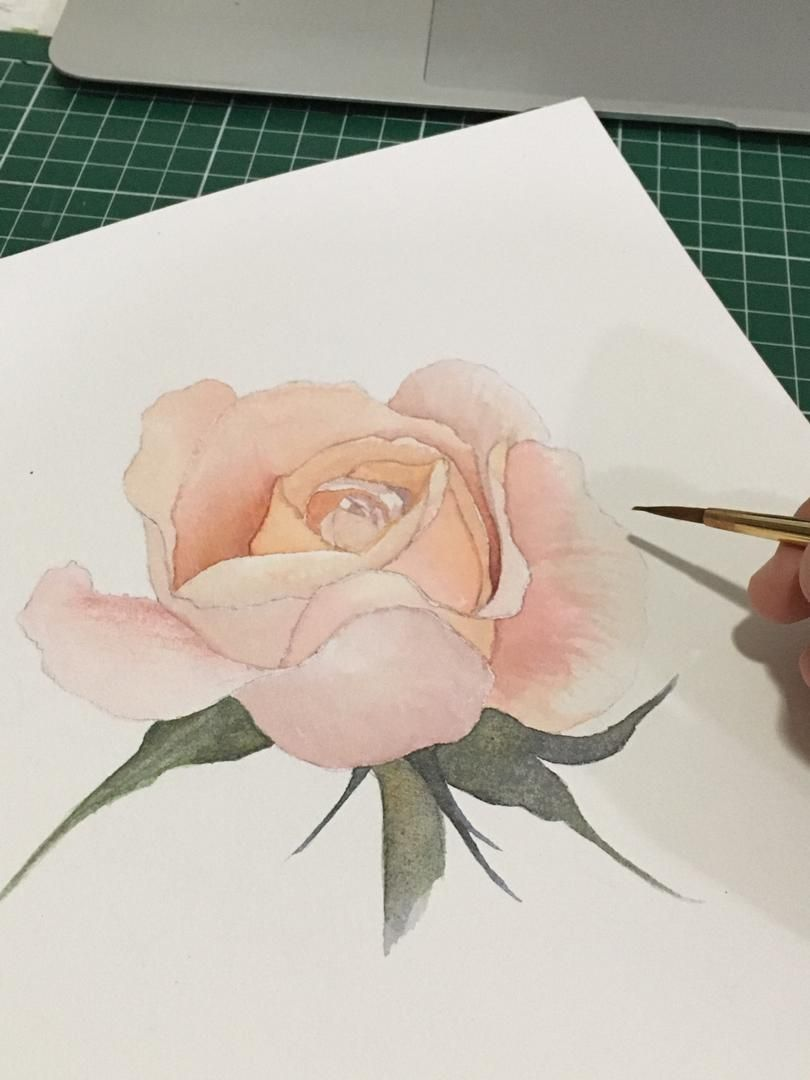 Watercolour Rose - image 2 - student project