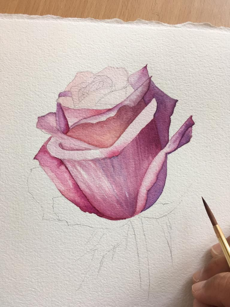 Watercolour Rose - image 6 - student project