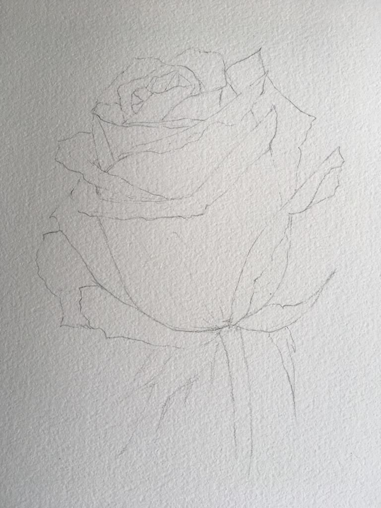 Watercolour Rose - image 5 - student project