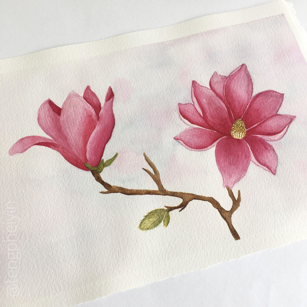 Magnolia - image 2 - student project