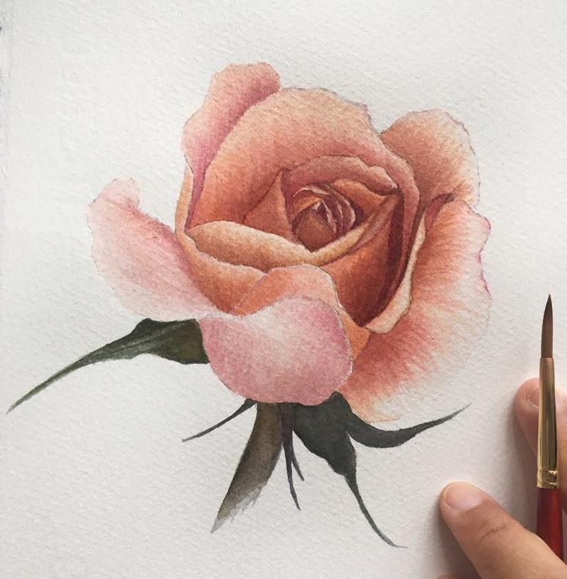 Watercolour Rose - image 3 - student project