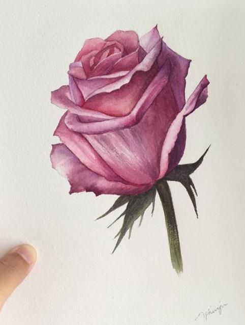 Watercolour Rose - image 7 - student project