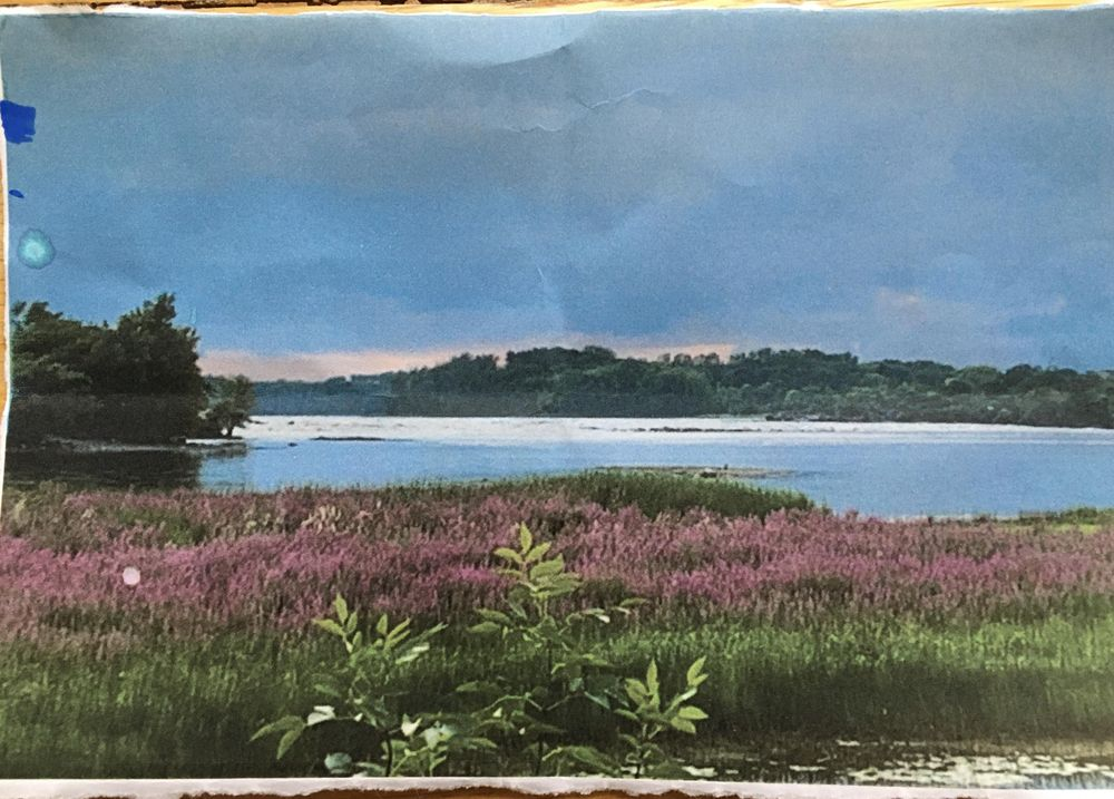 River Marsh - image 1 - student project