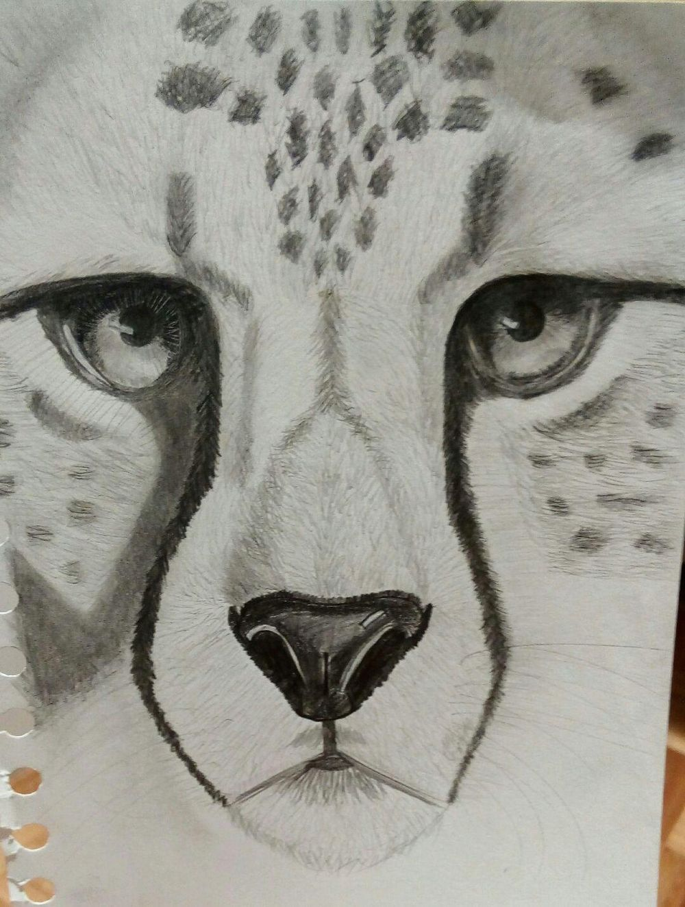 cheetah! - image 1 - student project