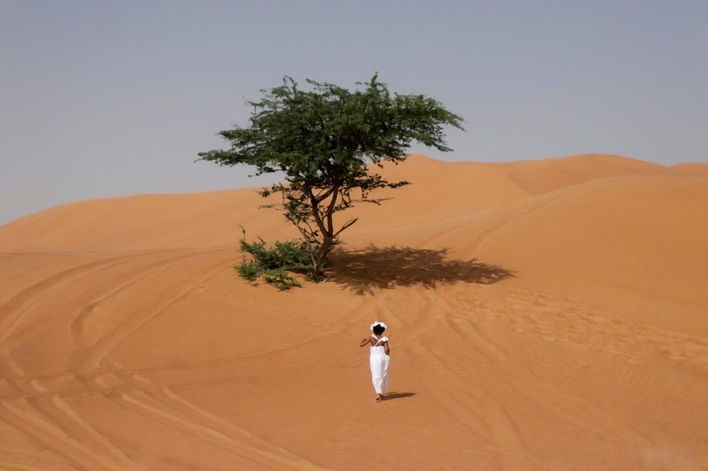 Desert Beauty - image 4 - student project