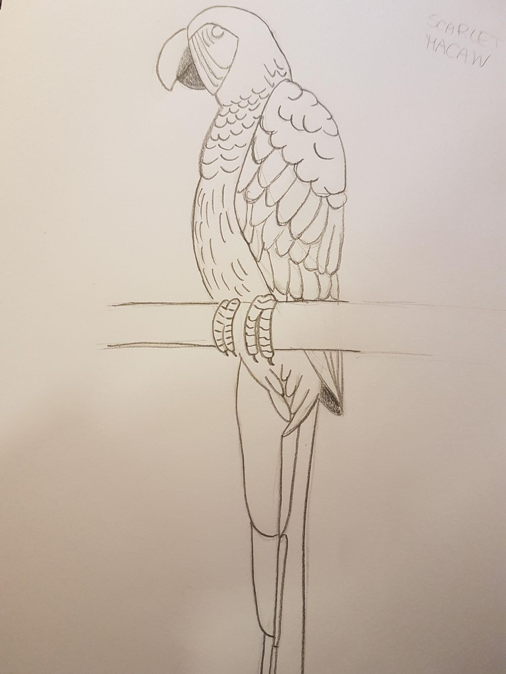 Birds - image 2 - student project